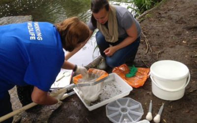 Can citizen science improve our rivers for wildlife? The Riverfly Monitoring Initiative one year on – 19th July