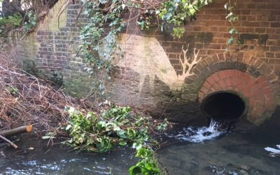 Qwag meeting – In search of River Quaggy's tributaries – 15th November