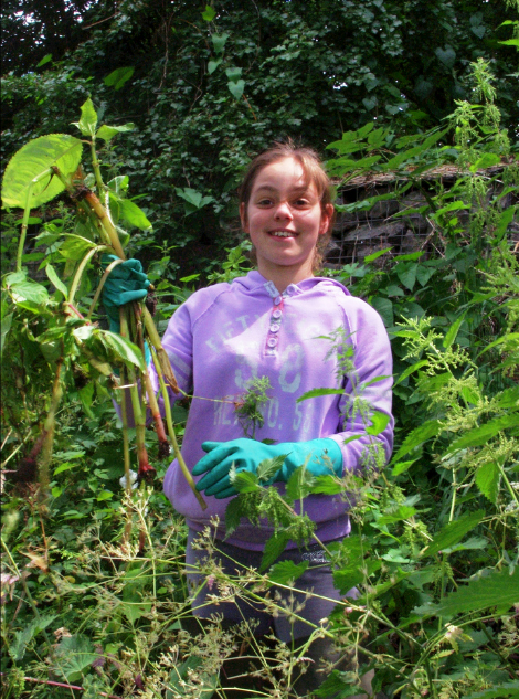 Helping control non-native invasive species like Himalayan Balsam