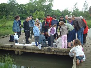 Pond dippers in Chinbrook Meadows examine their haul. (Photo courtesy Lewisham Walking Festival)