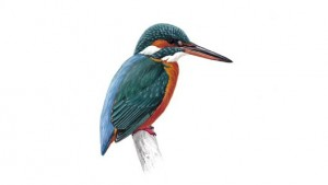 BURA recognises Kingfisher (5th March 2009)