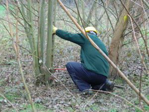 Whacking Chinbrook's Willows (18th February 2011)