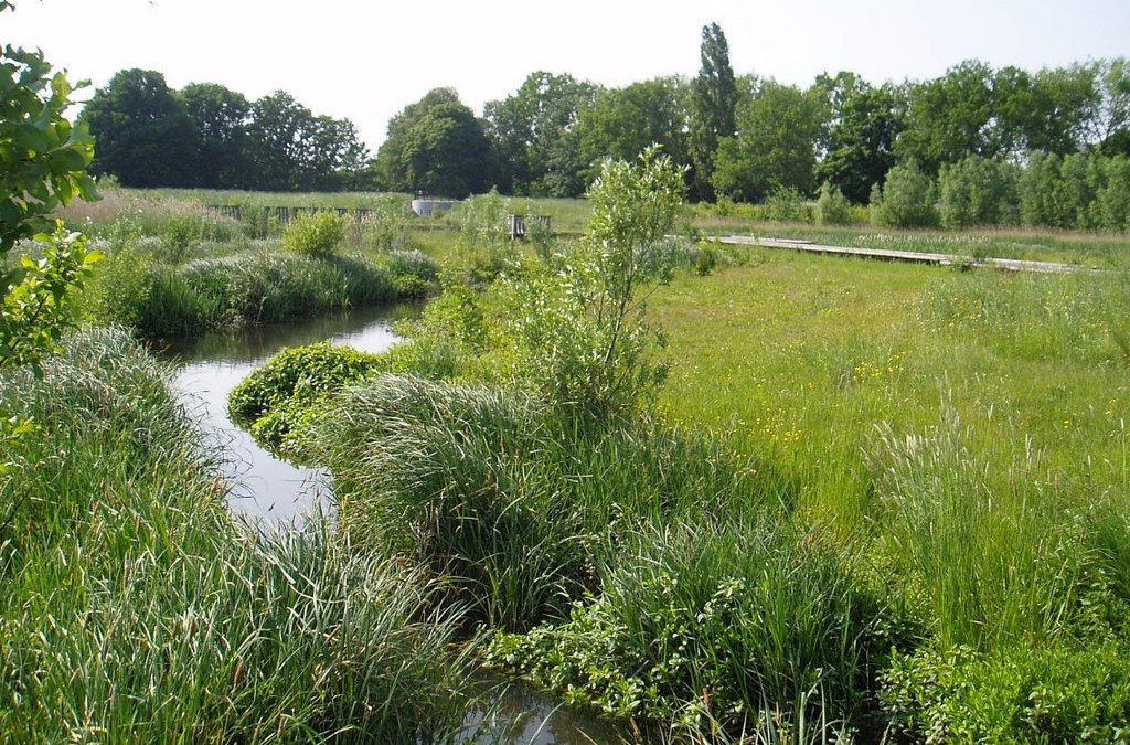 River Quaggy, Sutcliffe Park