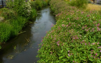 Qwag AGM – Pesky Plants and how to avoid them! – 16th March