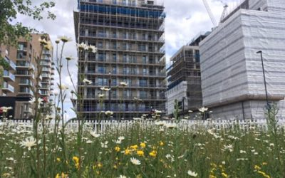In Search of Plant Folklore – 20th May 2020