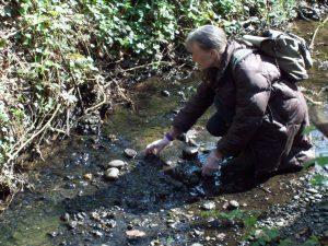 Pamela, QWAG Secretary, selecting pebbles in the Kyd Brook, Orpington