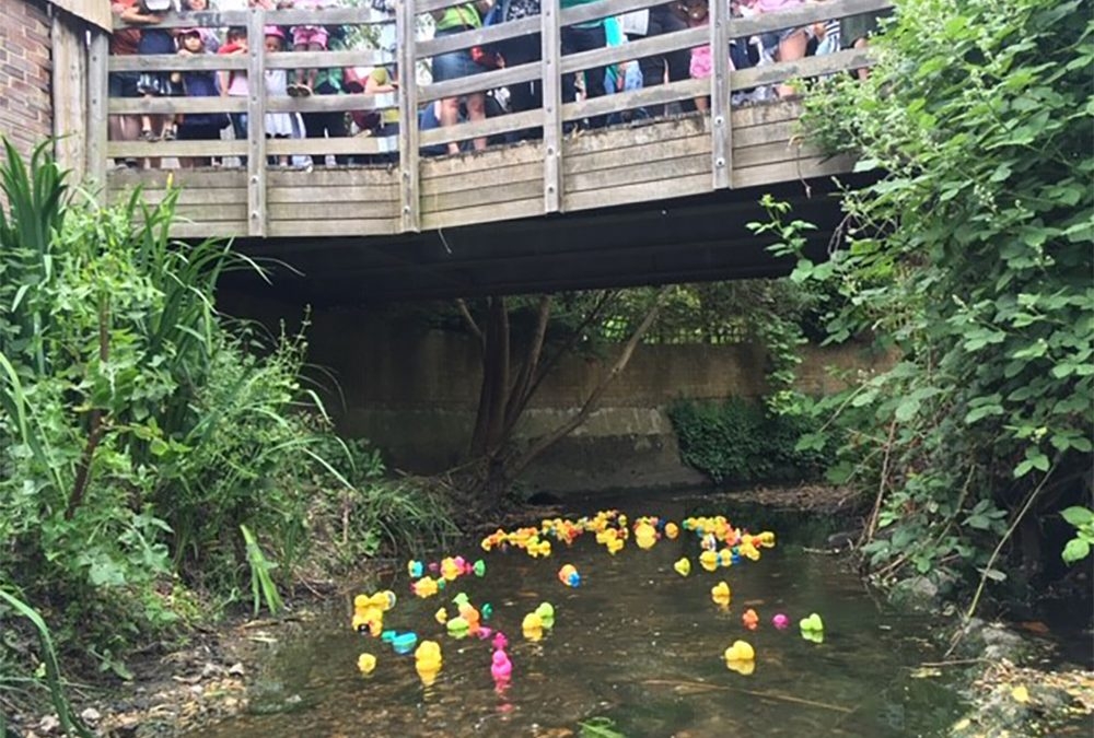 The 6th Great Quaggy Duck Race